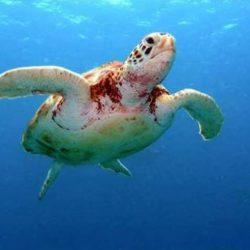 NOTA POLÍTICA: Em defesa do Projeto Tamar, das tartarugas marinhas e da Reserva Biológica de Santa Izabel