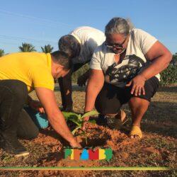 Em alusão à Semana da Árvore ação realiza plantio de espécie frutífera (Abacateiro)